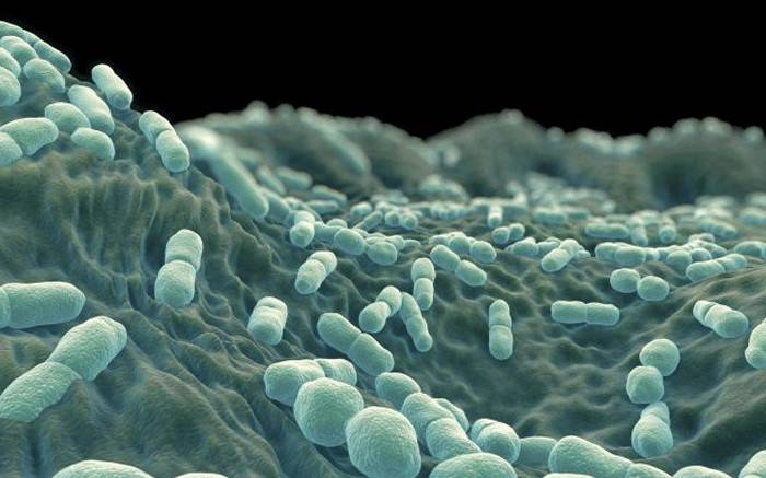 Deaths from listeriosis outbreak now top 100